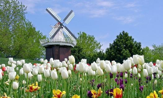 荷兰赏花之旅-西线