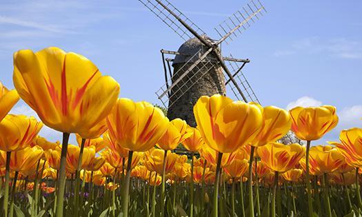荷兰赏花-德累斯顿、莱比锡、耶拿3日线