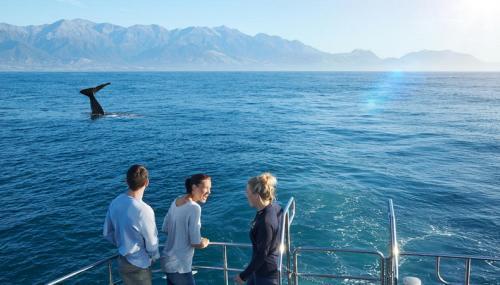 海峡穿越 活力南岛9日有氧之旅
