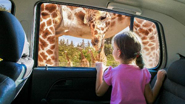 普埃布拉野生动物园一日游(墨西哥城出发)
