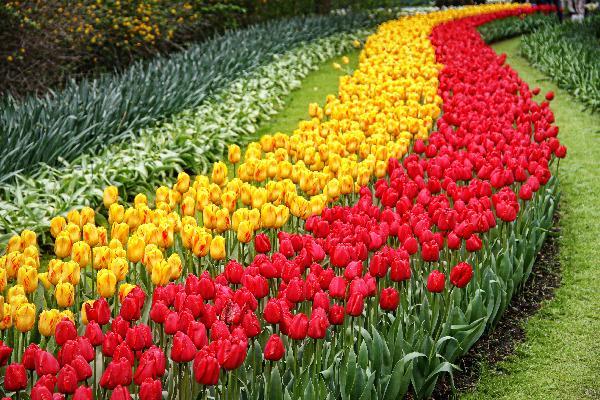 闻香赏花识荷兰 - 荷兰两日赏花团