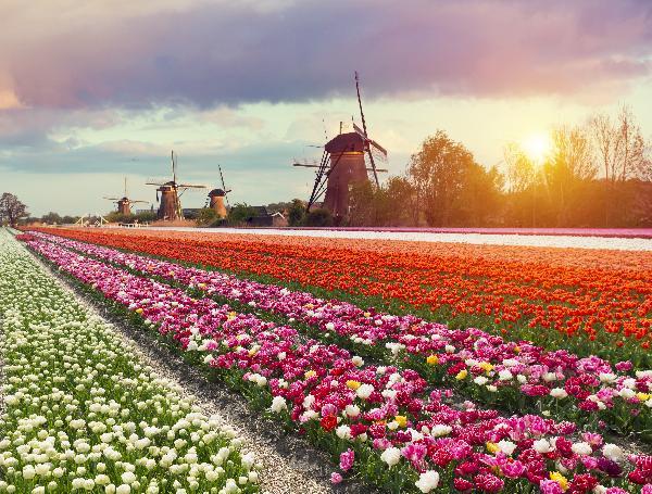 荷兰赏花之旅-南线