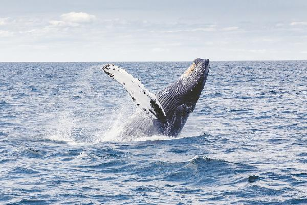Day Tour: Whale Watching from Reykjavik, Iceland