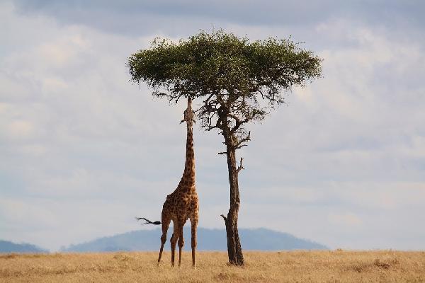 肯尼亚8天7晚豪华深度团(英文团)